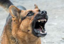 aggredita da due cani