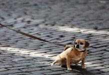 rissa tra cani
