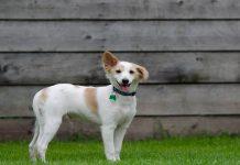 box ricovero cani
