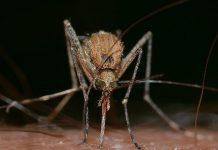 morta di malaria