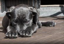 aggredito da un cane