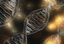trapianto cromosomico