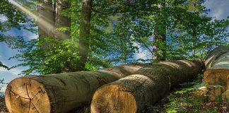 esposizione a polveri di legno duro