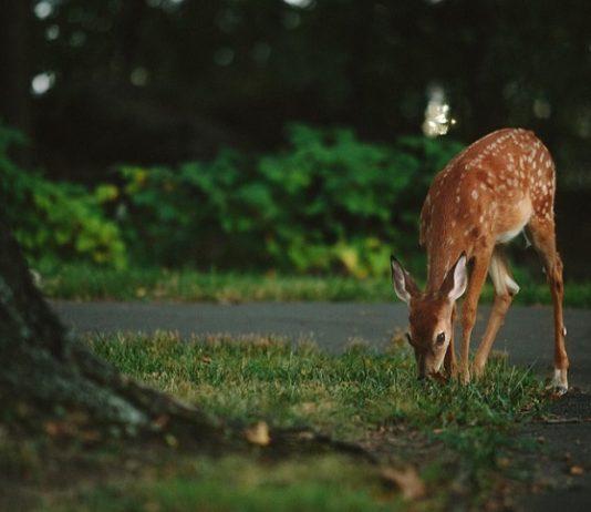 scontro con animali selvatici
