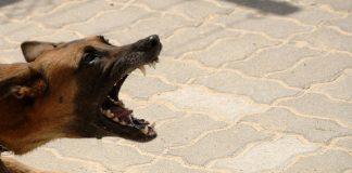 sinistri provocati da animali