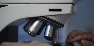 infezione da enterococcus faecalis contratta in ospedale