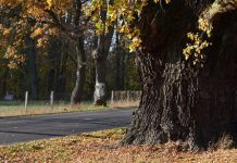 Impatto con un albero