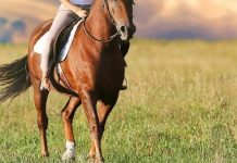 caduta da cavallo